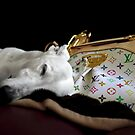 doggie bag by photofairy