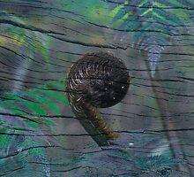 Paua Koru by Karen Lewis