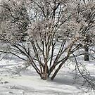 winter dogwood by Paul Kavsak