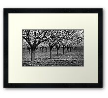 trees in raw Framed Print