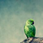 Emo, the parrot by digiphotography