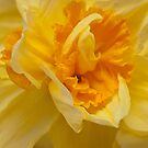 Daffodil close up by Magdalena Warmuz-Dent