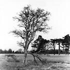 Broken Tree and Bridge, Phoenix Park, Dublin by Dave  Kennedy