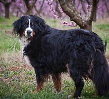 Cherry Dog by Dory Breaux