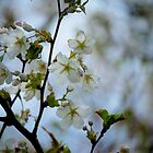Pear Blossom by linaji