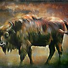 European bison(Poland) by andy551