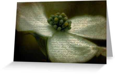 Vintage Dogwood by Karen Lewis