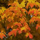 Leaves by ffuller