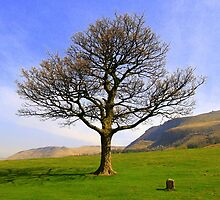 A tree on a hill by shelleybabe2