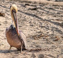 Pelican On The Beach by Eddie Yerkish