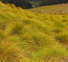 Alpine Button Grass Plain by Janice E. Sheen