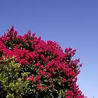 Lagerstroemia - Crape Myrtle by SophiaDeLuna