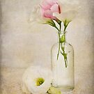 softly, softly by Barb Leopold