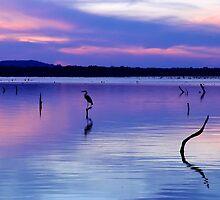 Water Bird by Carolyn  Fletcher