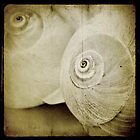 Grunged Shells 2 by M a r i e B a r c i a