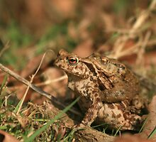 Naughty time for Bufo bufo!  by miradorpictures