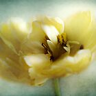 Yellow Tulip by Aj Finan