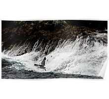 Gull and Wild Surf Poster