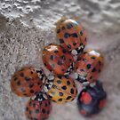 The Ladybug Huddle by Larry Davis