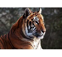 The Tyger Photographic Print
