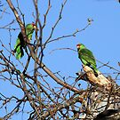 Wild Parrot Pair by DARRIN ALDRIDGE