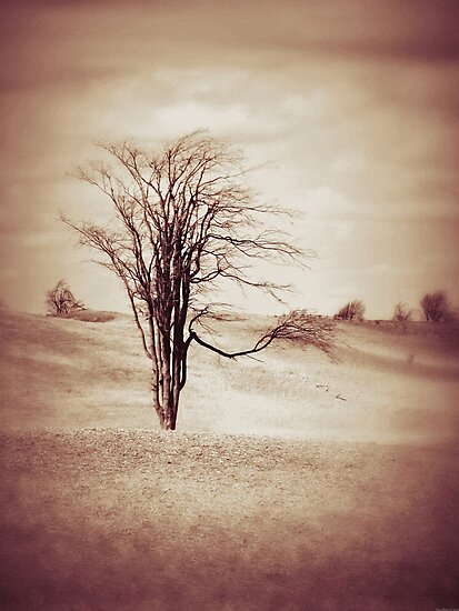 Serenity By Nature Tree by MissDawnM
