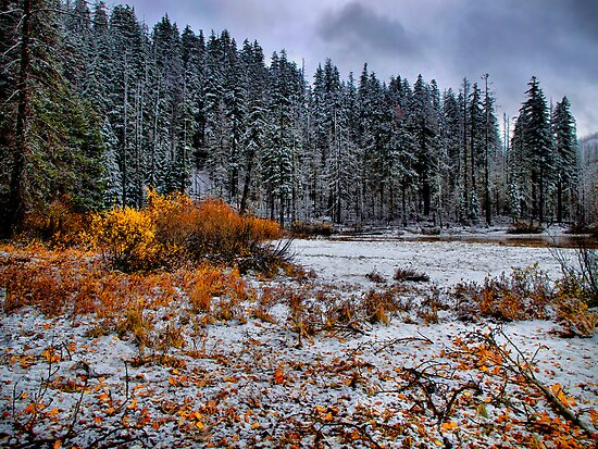 Still Color by Charles & Patricia   Harkins ~ Picture Oregon