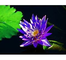 Tranquility in the garden Photographic Print