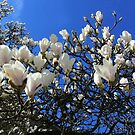 Magnolia heaven by bubblehex08