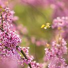 All Pinked Out by Christopher Gaines