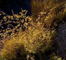 Willow Wisp by Rod J Wood