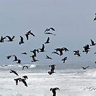 """""""Flight At Dusk"""" by Gail Jones"""