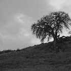 B/W Old Tree on Hill by lightportal
