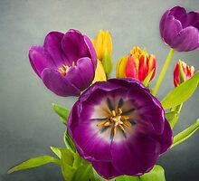 Tulip Bouquet by Tracy Riddell