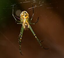 Mabel Orchard Spider by Otto Danby II