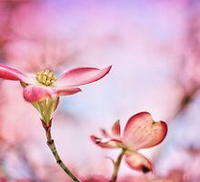 Pink Passion by Darren Fisher