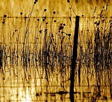 Flooded Farm by D-GaP