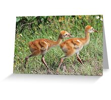 You can`t have it all, mom said we have to share! Greeting Card