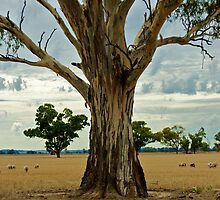Gum Tree by D-GaP