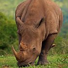 Brute Force and ignorance by Explorations Africa Dan MacKenzie