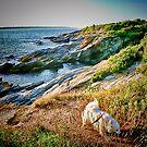 Sylvie at Beavertail  by Jack McCabe