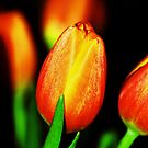 Spring Whispers by Terri~Lynn Bealle