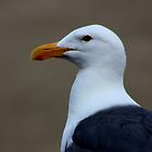Seagull  by ZWC Photography