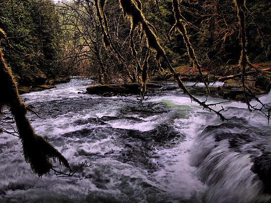 In The Dark ~ Brice Creek ~ by Charles & Patricia   Harkins ~ Picture Oregon