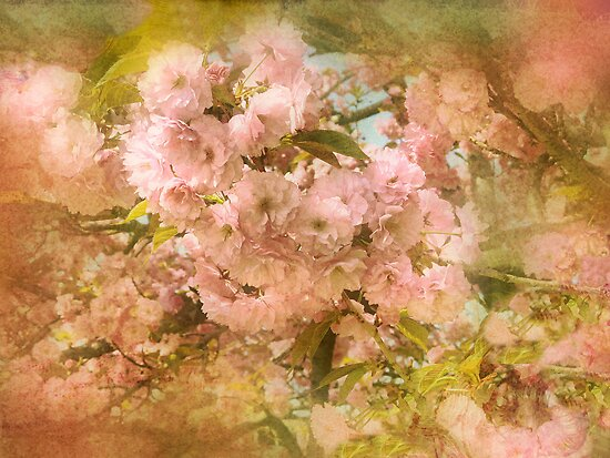 Cherry Blossoms by Jessica Jenney