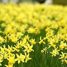 Spring has sprung by Pamela Rose Sime