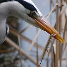 A Heron  by Declan Carr