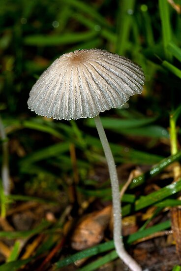 A Mushroom by Phil Campus