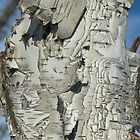 Well Weathered Birch by Rod J Wood