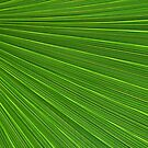 Palm Abstract by Kathleen Struckle